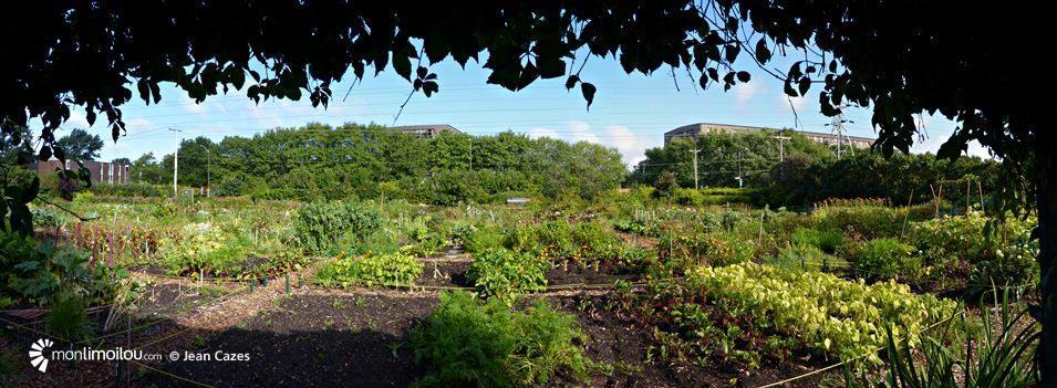 Jardin communautaire Sapinière-Dorion, quartier Limoilou.