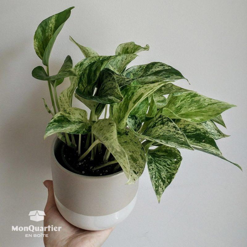 Plante et cache-pot