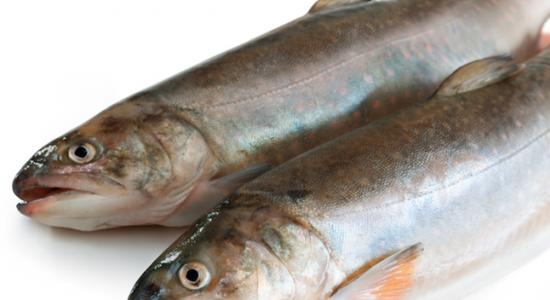 Atelier cuisine : Les bases – le poisson