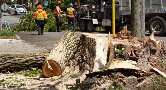 Abattage d'arbres sur le boulevard des Alliés : un enjeu de sécurité - Jean Cazes