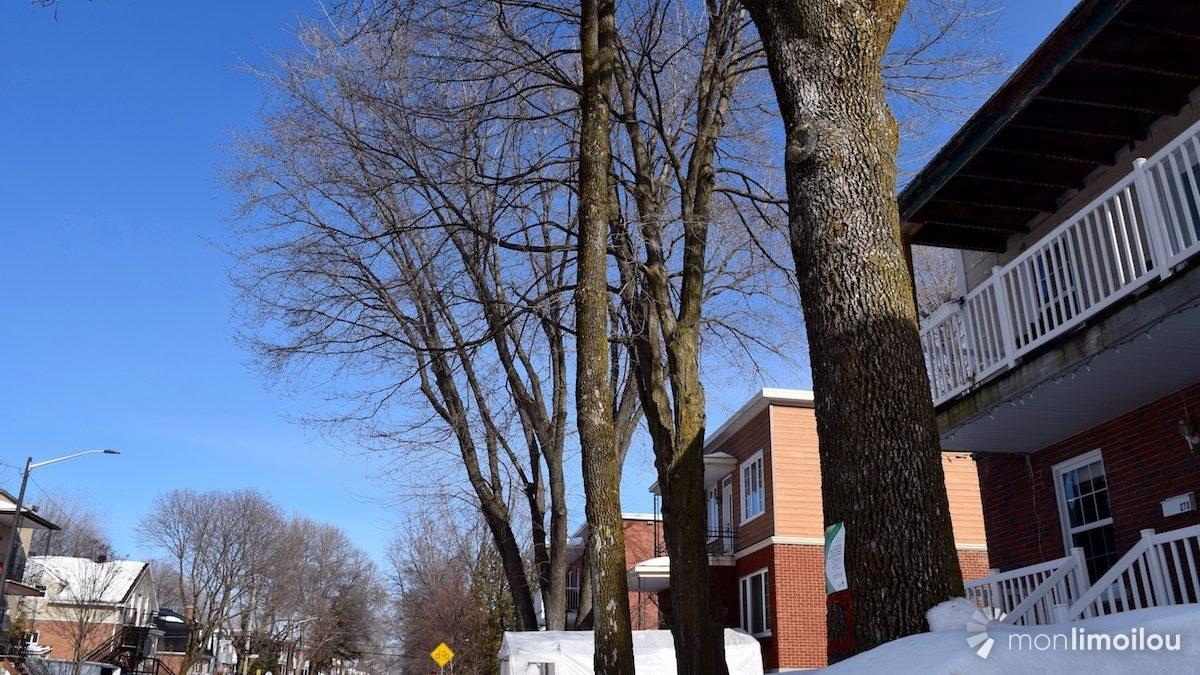 Des affiches ont été apposées sur quelques arbres de la rue des Saules Est.
