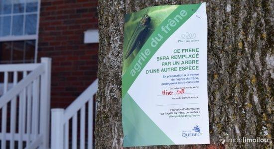 Abattage d'arbres prévu sur la rue des Saules Est - Raymond Poirier