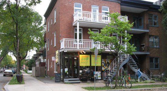 La Corde Ombellifère : un bar à plantes en janvier 2019 derrière l'Accommodation Bio - Suzie Genest