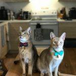 Service vétérinaire mobile : examen de santé à domicile - Clinique vétérinaire féline mobile