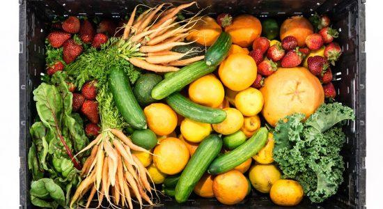 Se nourrir grâce au glanage urbain
