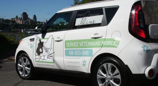 Livraison gratuite avec achat minimum de 20 $ | Clinique Vétérinaire Féline de Ste-Foy | Service mobile