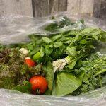 Légumes bio de la Ferme de la Coulée douce - Au Fruit des Moines