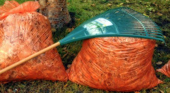 La collecte des feuilles devancée à Québec - Julie Rheaume