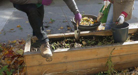 Croque mon potager: un projet d'agriculture urbaine citoyenne pousse dans Maizerets - Suzie Genest