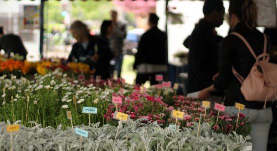Saint-Sauveur en fleurs 2019