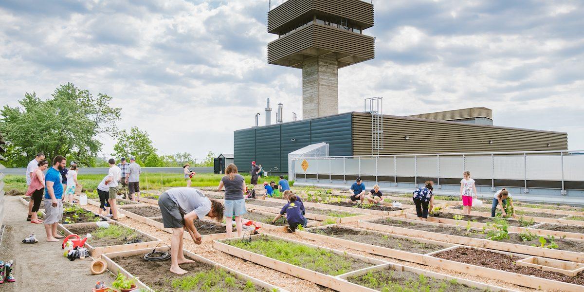 Un jardin communautaire sur le toit du Cégep Limoilou | 13 juin 2017 | Article par Monlimoilou
