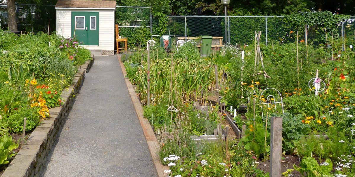 Deux nouveaux jardins communautaires dans Limoilou en 2021 | 5 novembre 2020 | Article par Suzie Genest