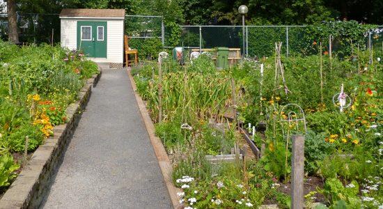 Deux nouveaux jardins communautaires dans Limoilou en 2021 - Suzie Genest