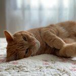 Taille de griffes pour chats – à domicile - Clinique Vétérinaire Féline de Ste-Foy | Service mobile