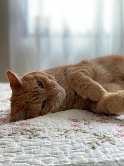 Taille de griffes pour chats – à domicile | Clinique Vétérinaire Féline de Ste-Foy | Service mobile