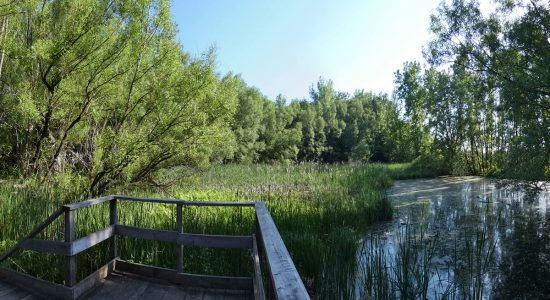Regards sur la nature limouloise (1) : les fleurs des marais du Domaine Maizerets - Jean Cazes