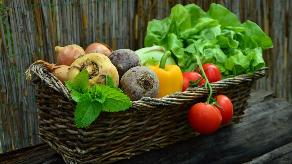 Cultiver pour donner: tendre une main nourricière | 6 juin 2020 | Article par Véronique Demers