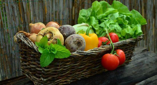 Cultiver pour donner: tendre une main nourricière - Véronique Demers