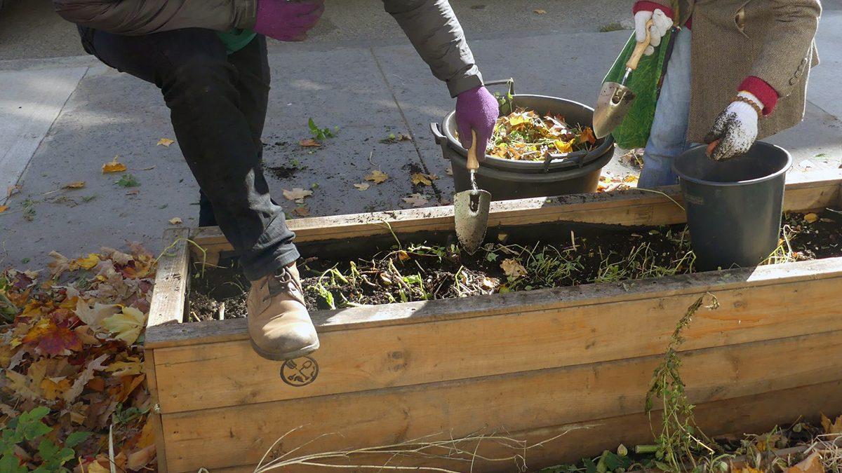 Croque mon potager: un projet d'agriculture urbaine citoyenne pousse dans Maizerets | 28 avril 2021 | Article par Suzie Genest