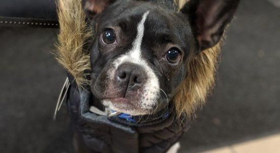 Sélection de manteaux d'hiver pour chiens   Animalerie Boutique Tropicale