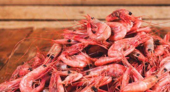 Arrivage des crevettes de Sept-Îles   Poissonnerie Unimer