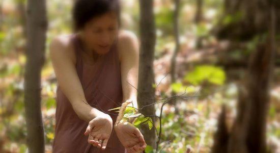 «Danser les arbres» Lancement et performance